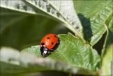 bfoto ru 3589a Декабрь 2011   в фотобанк добавлены новые фотографии