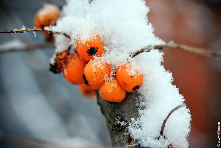 Ягоды в снегу своими руками 96