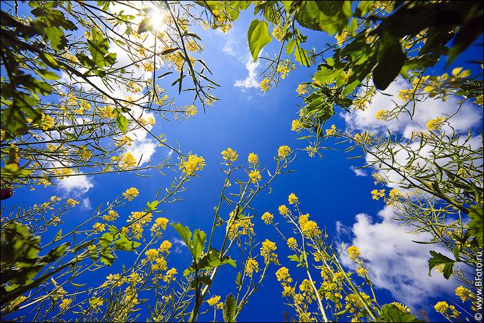 картинки поля цветов: