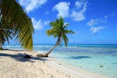 Пляж с пальмой Доминикана