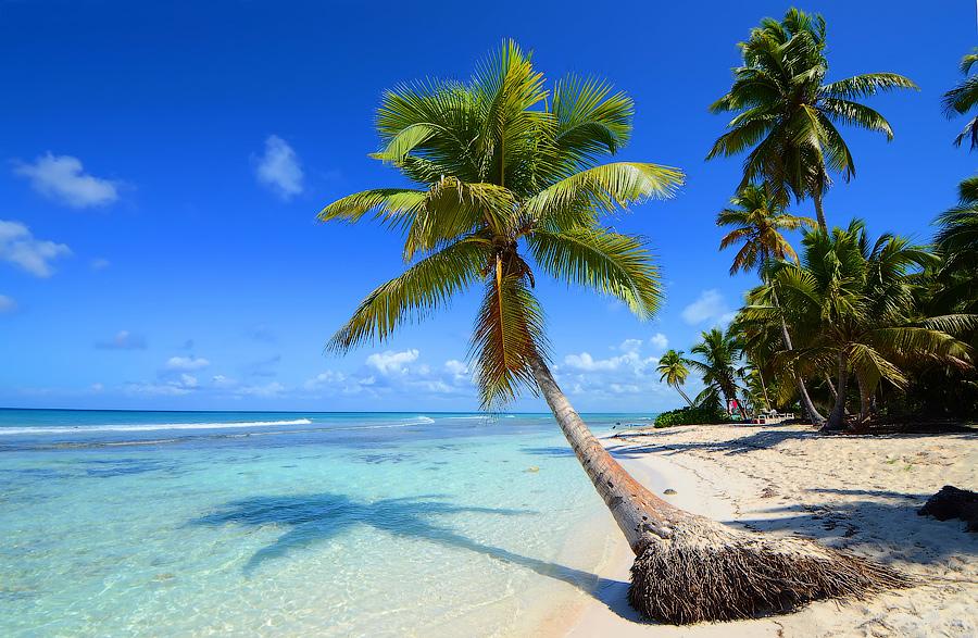 Картинки по запросу карибы