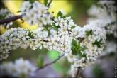 4533a Дыхание весны в интерьере дома, квартиры, весенние фотообои
