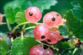4567a Новые фото высокого разрешения фотобанка BFoto.ru