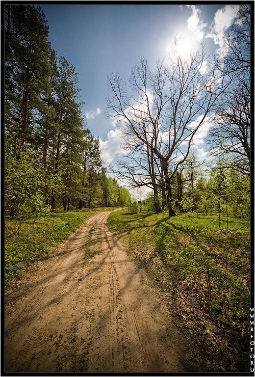 9 мая 2009 года, майский лес