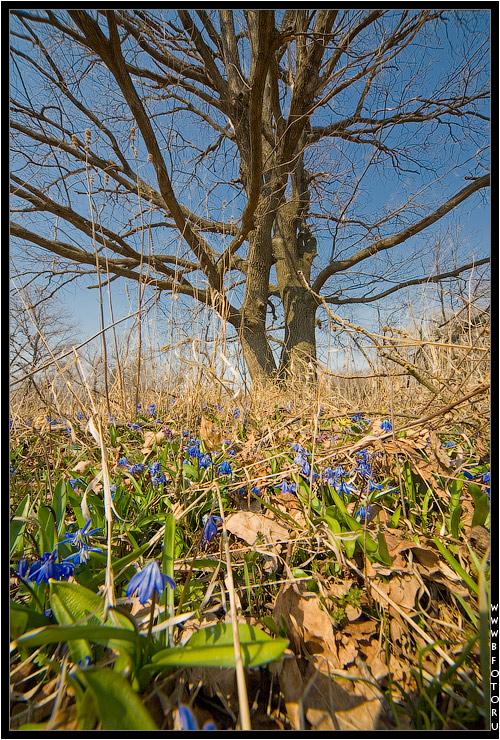 Весна, первые апрельские цветы в лесу