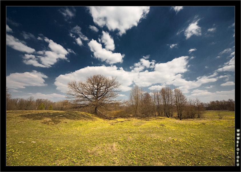 Весенний пейзаж, желтые первые цветочки
