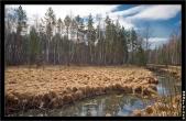 bfoto ru 1359a Дыхание весны в интерьере дома, квартиры, весенние фотообои