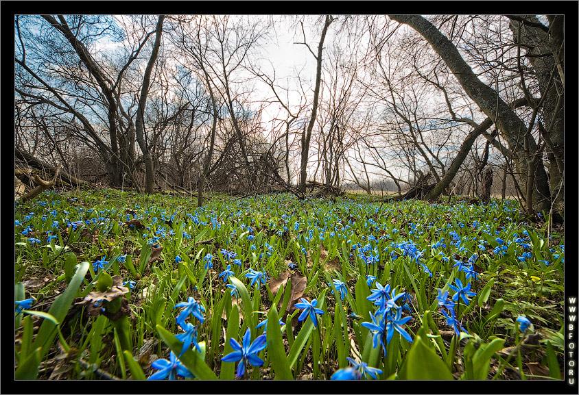 Первые весенние цветы в лесу