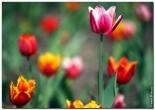 bfoto ru 1510a Дыхание весны в интерьере дома, квартиры, весенние фотообои