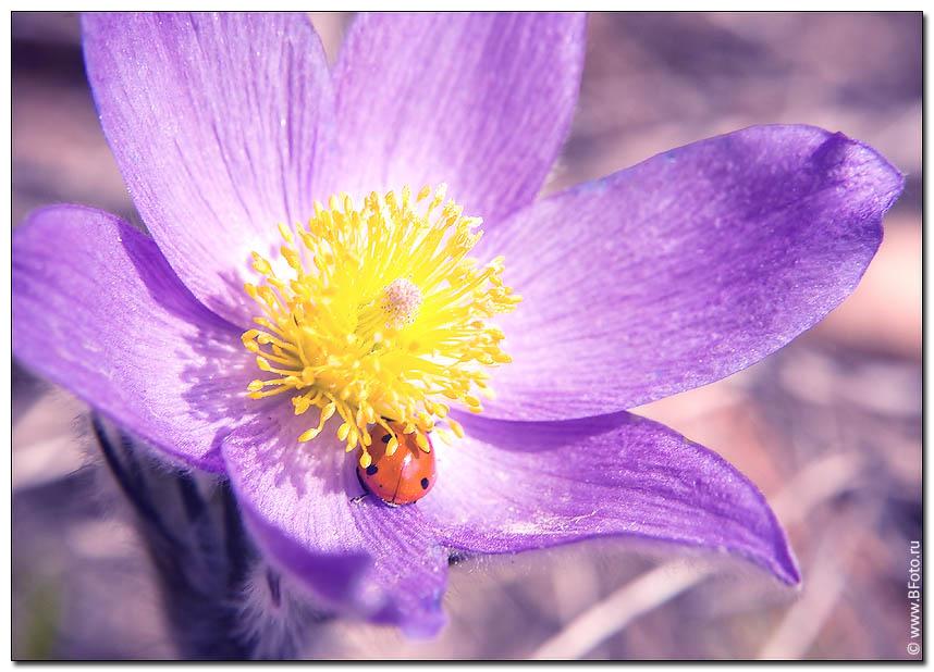 Природа весною проснулась!