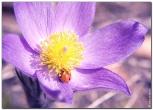 bfoto ru 1549a Дыхание весны в интерьере дома, квартиры, весенние фотообои