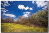 bfoto ru 1588a Дыхание весны в интерьере дома, квартиры, весенние фотообои
