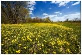 bfoto ru 1591a Дыхание весны в интерьере дома, квартиры, весенние фотообои