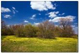 bfoto ru 1592a Дыхание весны в интерьере дома, квартиры, весенние фотообои