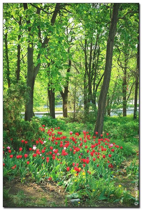 Весенний пейзаж с тюльпанами