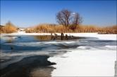 bfoto ru 2703a Дыхание весны в интерьере дома, квартиры, весенние фотообои