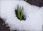 bfoto ru 2717a Дыхание весны в интерьере дома, квартиры, весенние фотообои