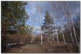 bfoto ru 2803a Дыхание весны в интерьере дома, квартиры, весенние фотообои