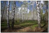 bfoto ru 2828a Дыхание весны в интерьере дома, квартиры, весенние фотообои