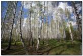 bfoto ru 2829a Дыхание весны в интерьере дома, квартиры, весенние фотообои