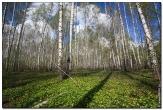 bfoto ru 2830a Дыхание весны в интерьере дома, квартиры, весенние фотообои