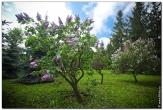 bfoto ru 3001a Дыхание весны в интерьере дома, квартиры, весенние фотообои