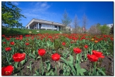 bfoto ru 3005a Дыхание весны в интерьере дома, квартиры, весенние фотообои