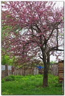 bfoto ru 3805a Дыхание весны в интерьере дома, квартиры, весенние фотообои