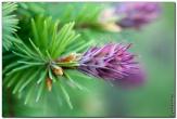 bfoto ru 3816a Дыхание весны в интерьере дома, квартиры, весенние фотообои