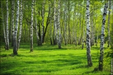 bfoto ru 3926a Дыхание весны в интерьере дома, квартиры, весенние фотообои