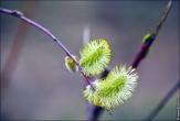bfoto ru 4162a Дыхание весны в интерьере дома, квартиры, весенние фотообои