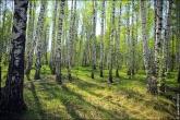 bfoto ru 4164a Дыхание весны в интерьере дома, квартиры, весенние фотообои