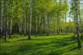 bfoto ru 4167a Дыхание весны в интерьере дома, квартиры, весенние фотообои