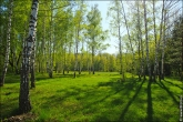 bfoto ru 4169a Дыхание весны в интерьере дома, квартиры, весенние фотообои