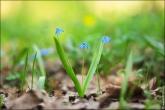 bfoto ru 4170a Дыхание весны в интерьере дома, квартиры, весенние фотообои