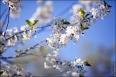 bfoto ru 4171a Дыхание весны в интерьере дома, квартиры, весенние фотообои
