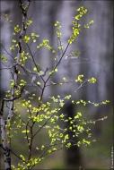 bfoto ru 4181a Дыхание весны в интерьере дома, квартиры, весенние фотообои