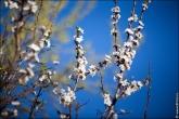 bfoto ru 4183a Дыхание весны в интерьере дома, квартиры, весенние фотообои