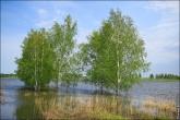 bfoto ru 4189a Дыхание весны в интерьере дома, квартиры, весенние фотообои