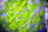 bfoto ru 4397a Дыхание весны в интерьере дома, квартиры, весенние фотообои