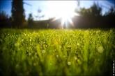 bfoto ru 4442a Дыхание весны в интерьере дома, квартиры, весенние фотообои