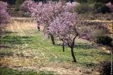 bfoto ru 4475a Дыхание весны в интерьере дома, квартиры, весенние фотообои