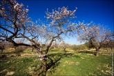 bfoto ru 4477a Дыхание весны в интерьере дома, квартиры, весенние фотообои