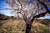 bfoto ru 4478a Дыхание весны в интерьере дома, квартиры, весенние фотообои