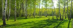 fotobank 4601a Дыхание весны в интерьере дома, квартиры, весенние фотообои