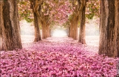 fotobank 4631a Дыхание весны в интерьере дома, квартиры, весенние фотообои