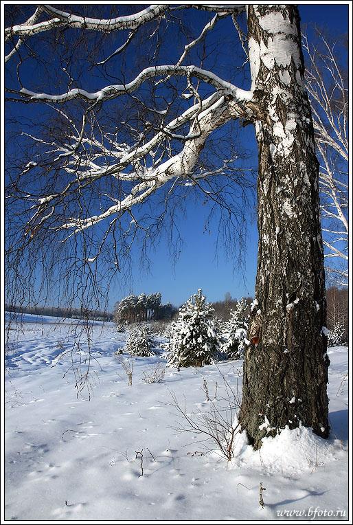 http://www.bfoto.ru/foto/winter/bfoto_ru_102.jpg