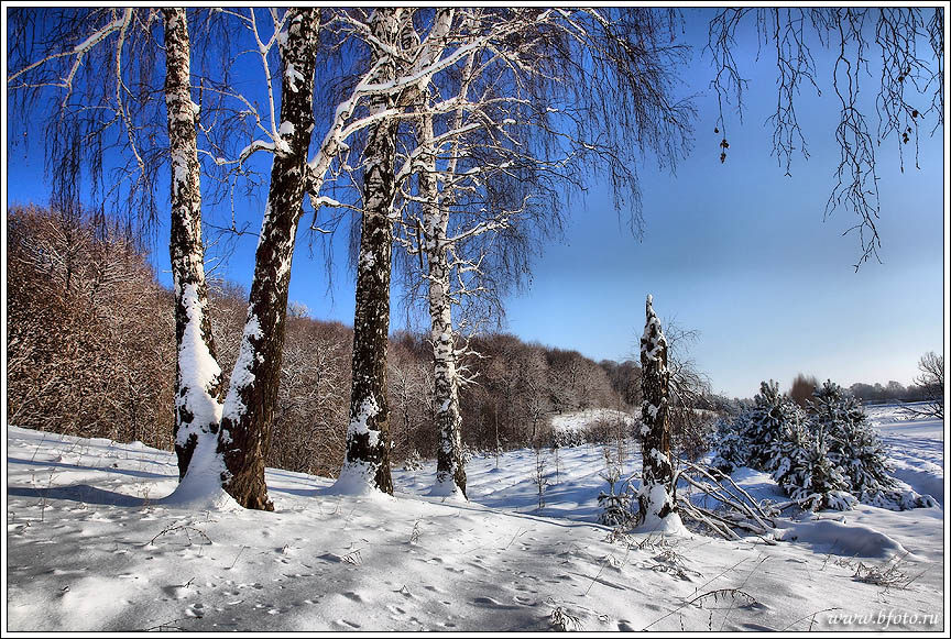 зимний пейзаж с березами. Техника обработки фото HDR