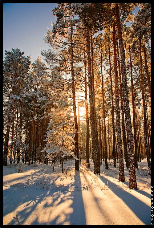 Обои Hd Для Телефона Вертикальные Зимний Лес