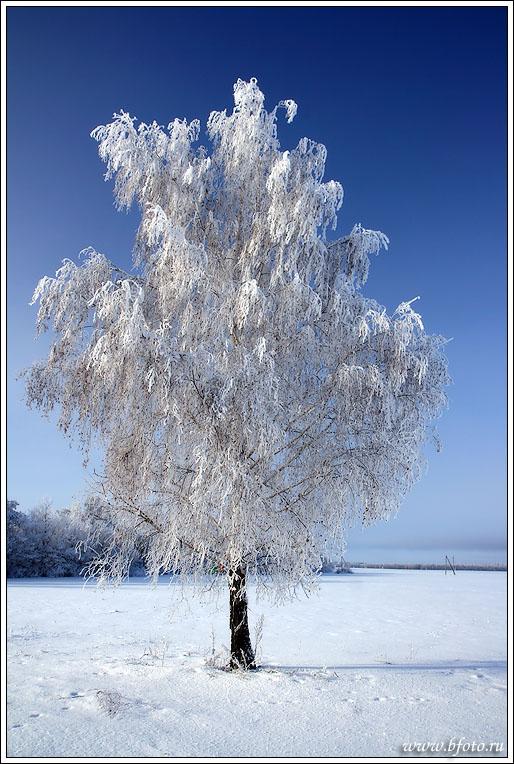 Залы зимнего дворца фото описание